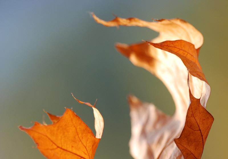 Осенняя зажигалочка
