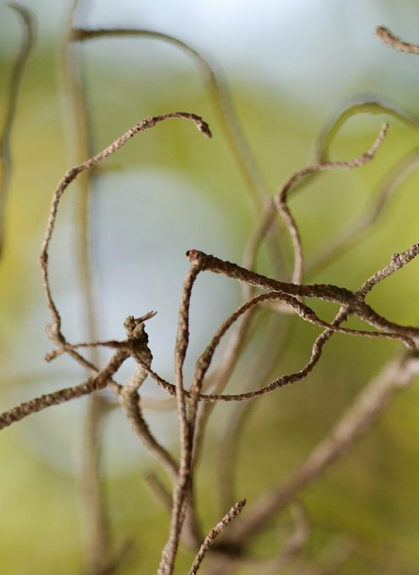 Жизнь растений теперь затаилась в этих странных обрубках ветвей